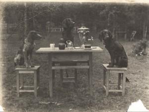 Охотничьи собаки Ивана Ивановича Бибикова